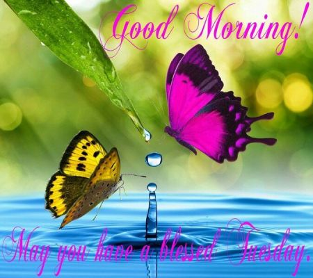 166584-Good-Morning-Have-A-Blessed-Tuesday