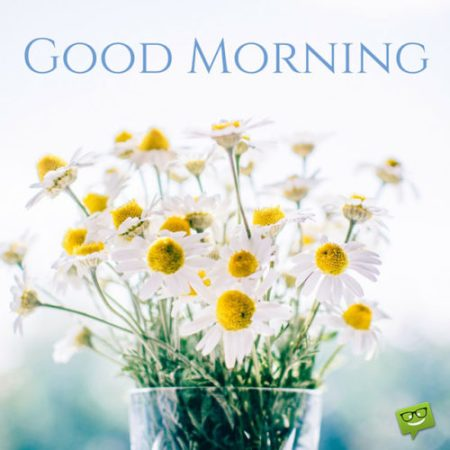 amazing-good-morning-images-and-quotes-daisies-500x500