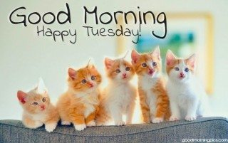 happy-tuesday-with-adorable-kittens-320x201