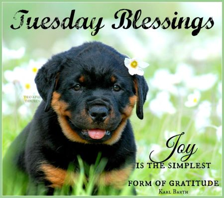 184866-tuesday-blessings
