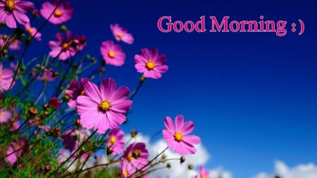 Good-Morning-stay-happy-like-flowers-1024x576