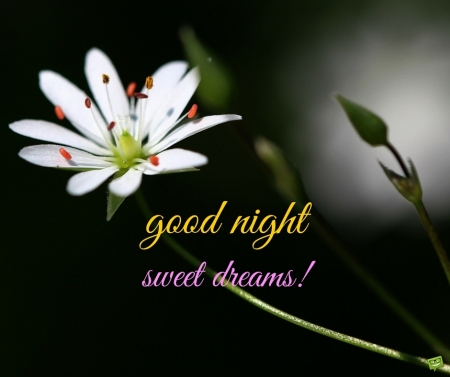 good-night-sweet-dreams-image-with-flowers